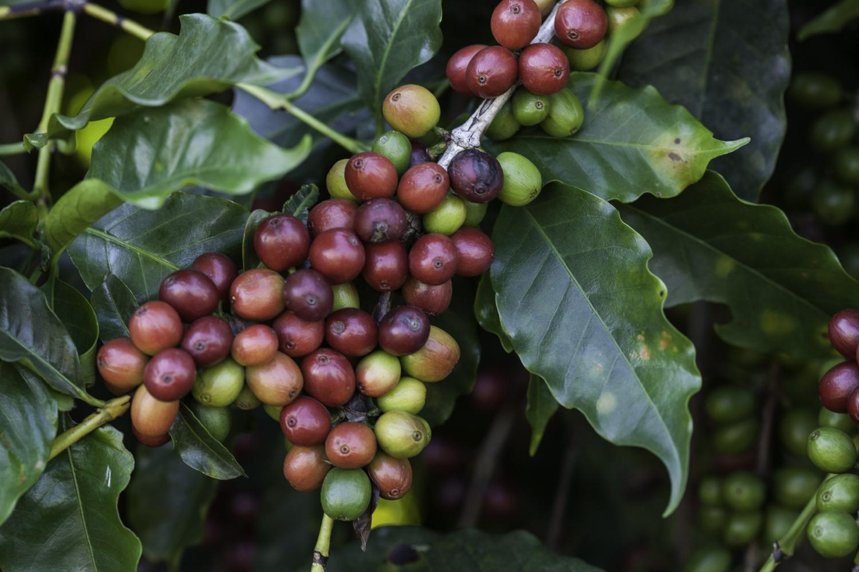 Acht gute Gründe für Sirocco-Kaffee